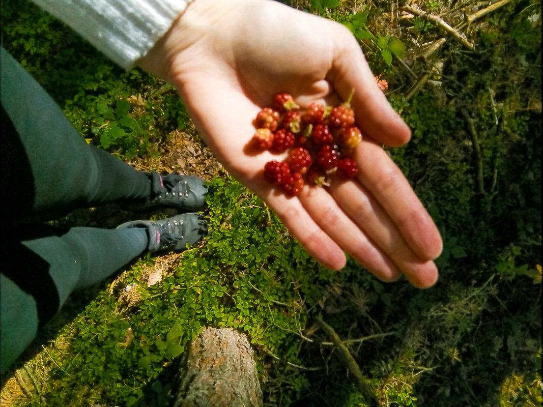 handful of raspberries